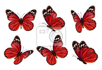 Bild Butterflies. Realistic colored insects beautiful moth vector collection of butterflies. Illustration set of flying butterfly red black