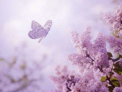 Bild Butterfly and flower