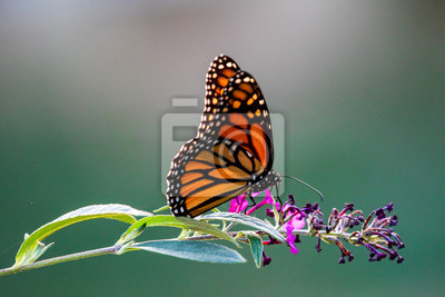 Bild butterfly on flower