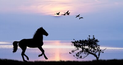 Bild Caballo corriendo por el lago