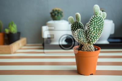 Bild Cactus Pflanze, Natur grünen Hintergrund oder Wallpaper.