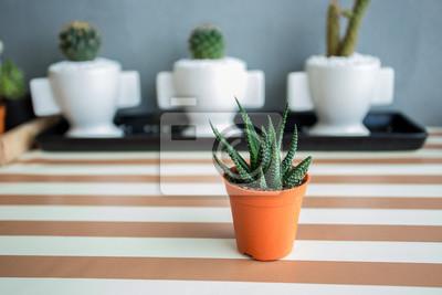 Bild Cactus Plant, Nature green background or wallpaper.