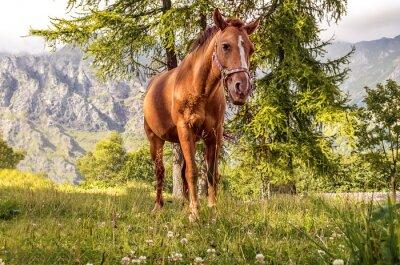 Bild Cavallo pascolo