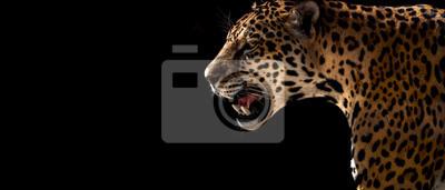 Bild cheetah, leopard, jaguar