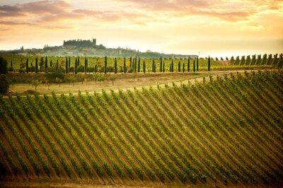 Bild Chianti-Hügel mit Weinbergen und Zypressen.  Toskanische Landschaft zwischen Siena und Florenz.  Italien
