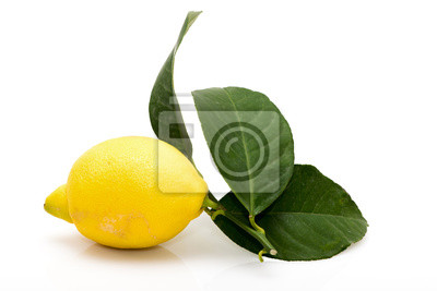 Bild Citron feuilles
