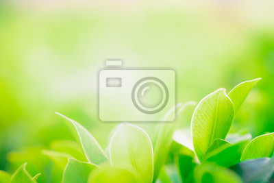 Bild Close up beautiful view of nature green leaves on blurred greenery tree background with sunlight in public garden park. It is landscape ecology and copy space for wallpaper and backdrop.
