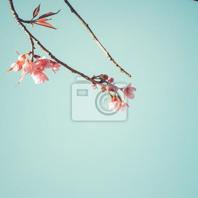 Bild Close-up der schönen Vintage Sakura Baum Blume (Kirschblüte) im Frühjahr. Weinlesefarbentonart.
