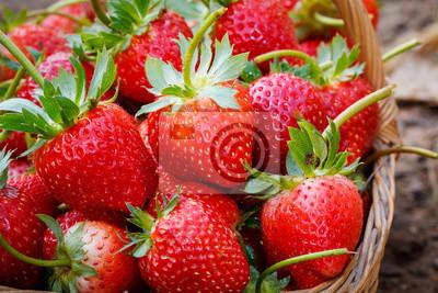Close up frische Erdbeere im Korb