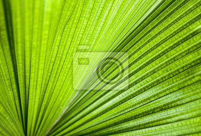 Bild Close-up Green leaf