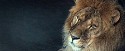 Bild close-up of an African lion