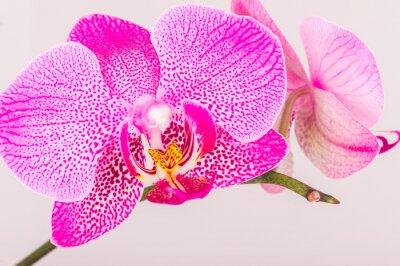 Bild Close-up of orchid blossom