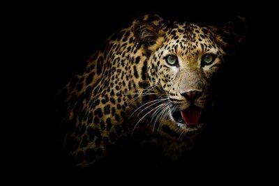 Bild Close up portrait of leopard with intense eyes