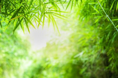 Bild Closeup beautiful view of nature green bamboo leaf on greenery blurred background with sunlight and copy space. It is use for natural ecology summer background and fresh wallpaper concept.
