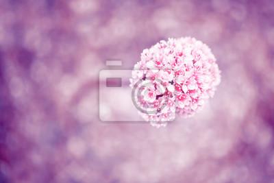 Closeup einer schönen blurred magenta blühende Blume auf einem unscharfen rosa Farbe Bokeh Hintergrund mit Kopie Raum. Geringe Tiefenschärfe verwendet.