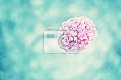 Closeup einer schönen magenta blühenden Blume auf einem verschwommenen cyan blauen Farbe Bokeh Hintergrund mit Kopie Raum. Geringe Tiefenschärfe verwendet.