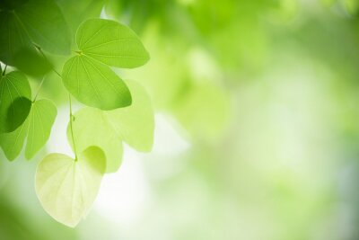 Bild Closeup nature view of green leaf on blurred greenery background in garden with copy space using as background natural green plants landscape, ecology, fresh wallpaper concept.