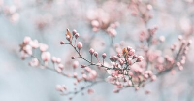 Bild Closeup of spring pastel blooming flower in orchard. Macro cherry blossom tree branch.