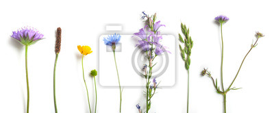 Bild closeup of wild grass and flowers on white background