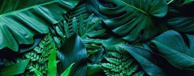 Bild closeup tropical green leaf background. Flat lay, fresh wallpaper banner concept