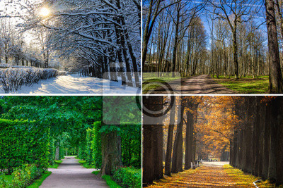 Bild Collage seasons . All season. Seasons in one photo. Winter spring summer autumn. Tree branch. Grass with dew. Nature.
