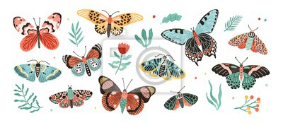 Bild Collection of elegant exotic butterflies and moths isolated on white background. Set of tropical flying insects with colorful wings. Bundle of decorative design elements. Flat vector illustration.