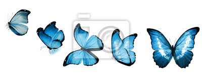 Bild Color butterflies , isolated on white background