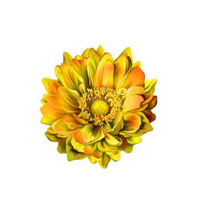 Bild Colorful Mona Lisa flower, Spring bloom