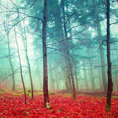 Colorful mystischen Herbstbäume