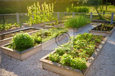 Bild Community kitchen garden. Raised garden beds with plants in vegetable community garden.