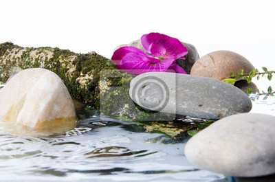 Bild Composition of stones, a flower and a tree branch in water