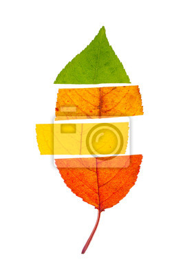 Bild Concept of change seasons. An autumn leaf divided to four colors, isolated on white background