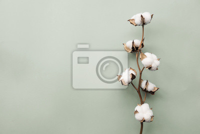 Bild Cotton flower on pastel pale gray paper background, overhead. Minimalism flat lay composition for bloggers, artists, social media, magazines. Copyspace, horizontal