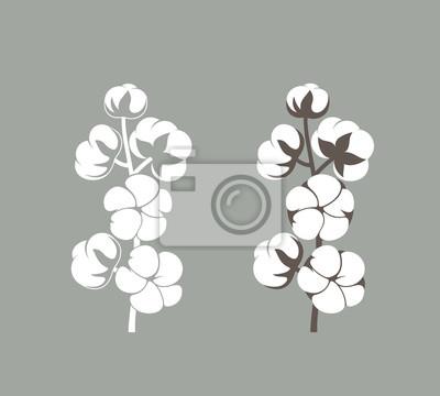 Bild Cotton plant. Isolated cotton on white background