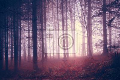 Creepy Jahrgang Farbe Wald