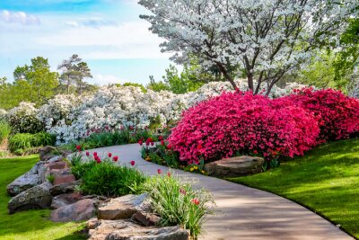 Bild Curved path through banks of Azeleas and under dogwood trees with tulips under a blue sky - Beauty in nature