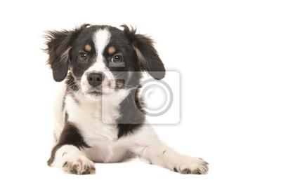 Cute Gemischte Rasse Schwarz Weiß Welpen Hund Mit Blick Auf Die