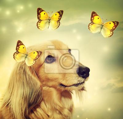 Dackel Hund mit Schmetterlingen