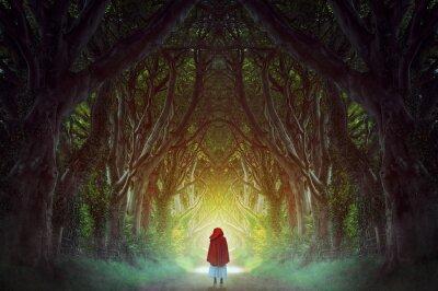 Bild Dark forest road