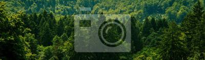 Bild Dark green forest landscape