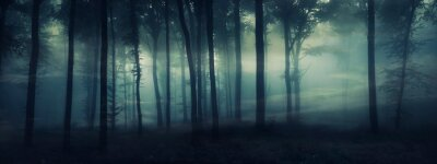 Bild dark mysterious forest panorama, fantasy landscape