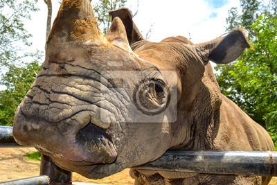 Bild das Nashorn steht für ein Metall Hindernis
