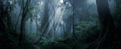 Bild Deep tropical forest in darkness