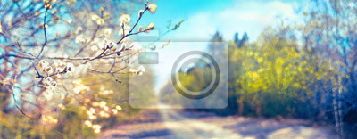 Bild Defocused spring landscape. Beautiful nature with flowering willow branches and forest road against blue sky with clouds, soft focus. Ultra wide format.