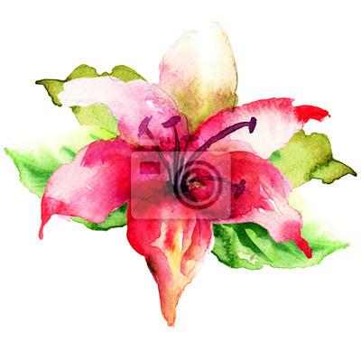 Dekorative Blume von LIly