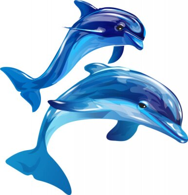 Bild Delfine weiß
