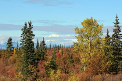 Bild Denali Nationalpark im Herbst