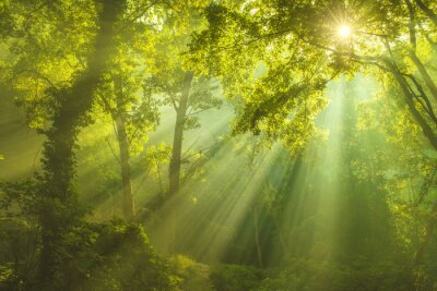 Bild Der Forest of Heaven