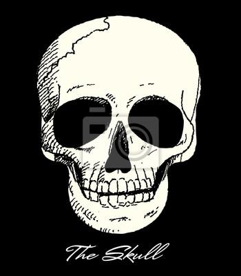 Der Schädel