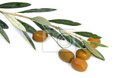 Bild des olives et un rameau d'olivier